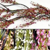 Набор сухоцветов 1,5м 5шт. 0568-2